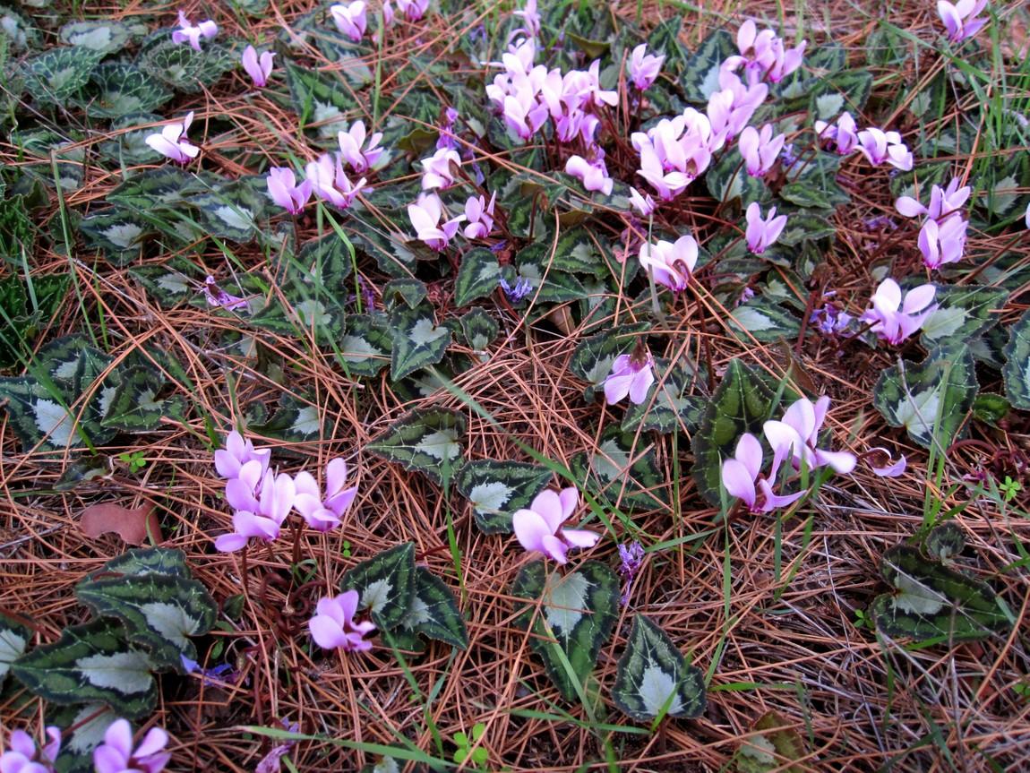 Дикие цветы в горах