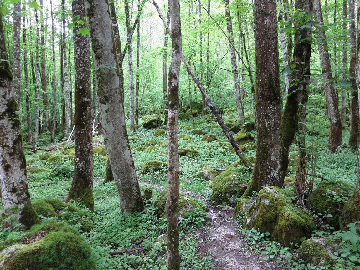 Национального парка Берхтесгаден Германия