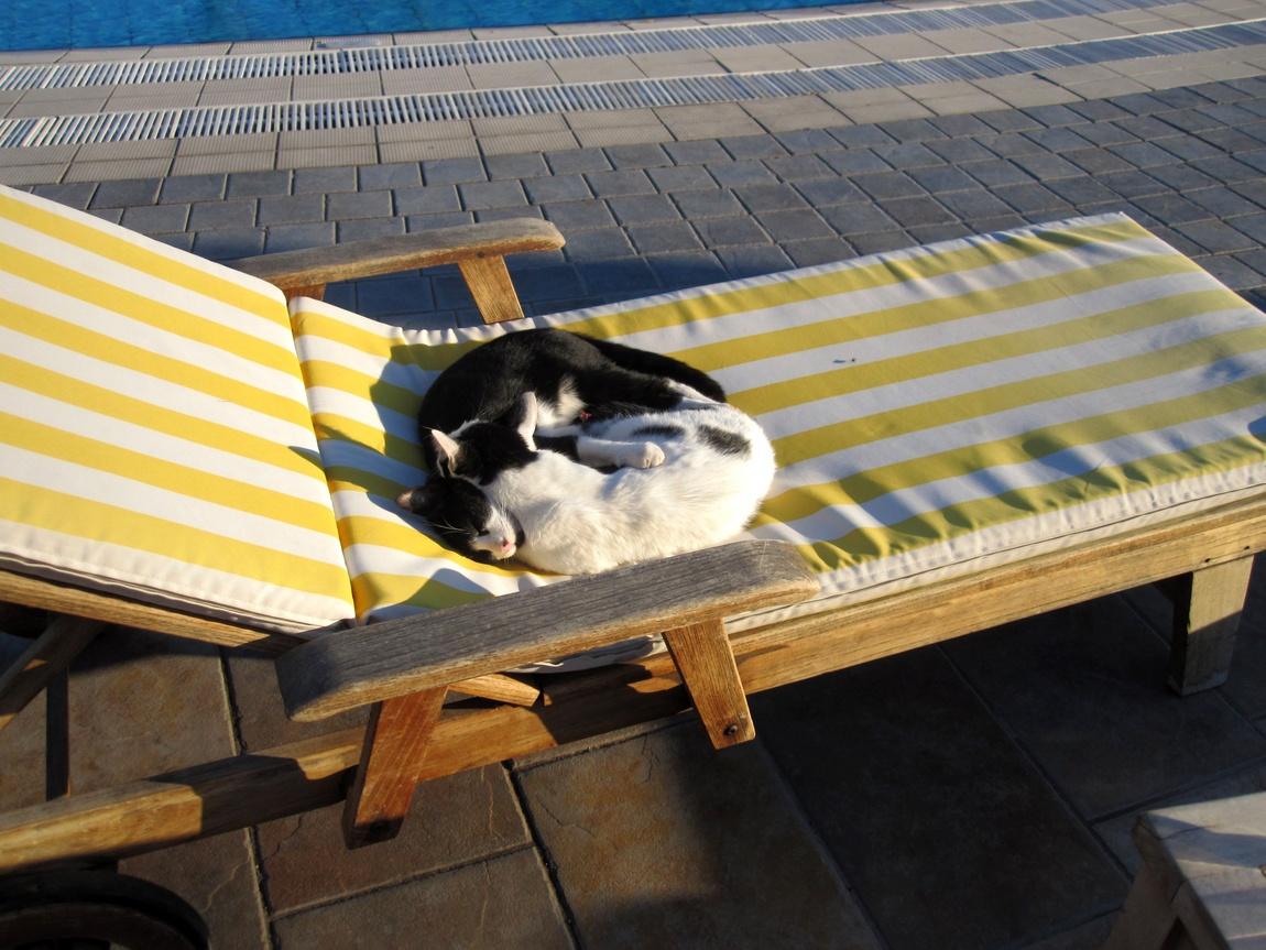 Кошки загорают в Турции