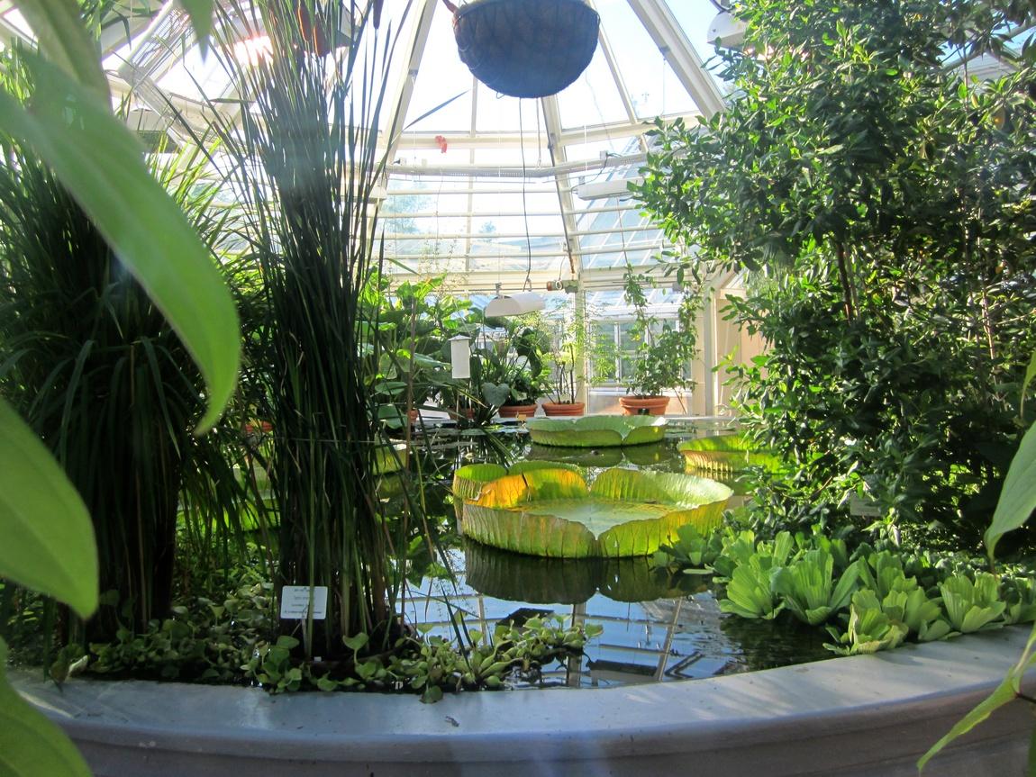 Ботанический сад. Хельсинки, Финляндия