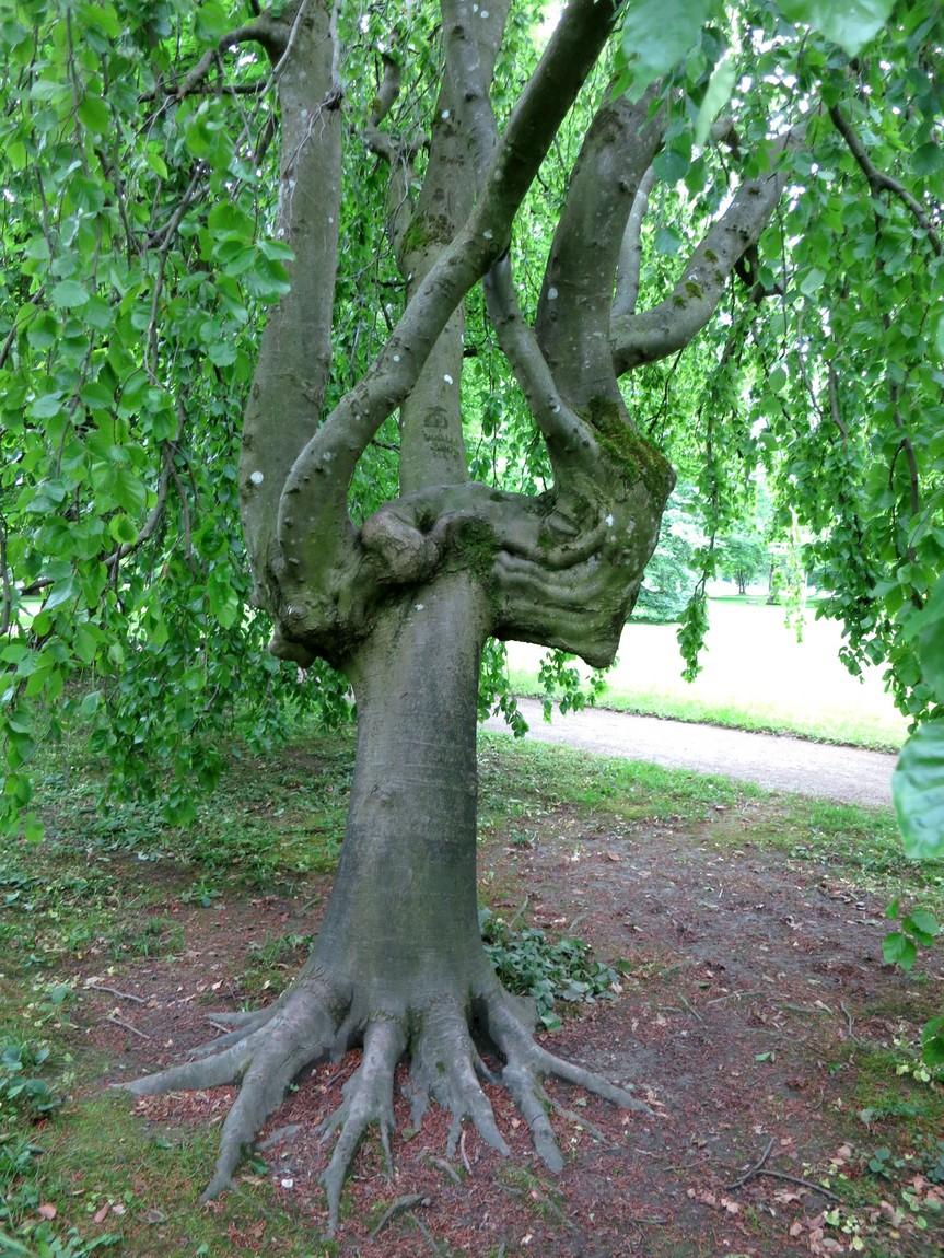 Странное дерево в парке Зальцбурга