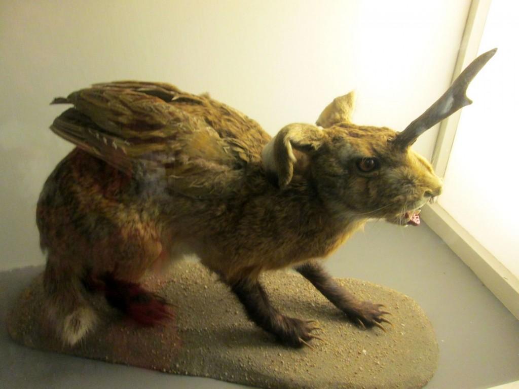 Заяц с рогами и крыльями в музее (Австрия)