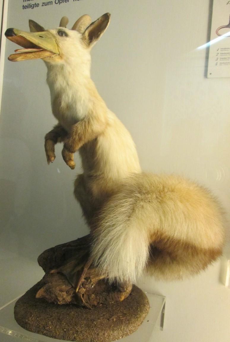 Забавные экспонаты в музее Зальцбурга