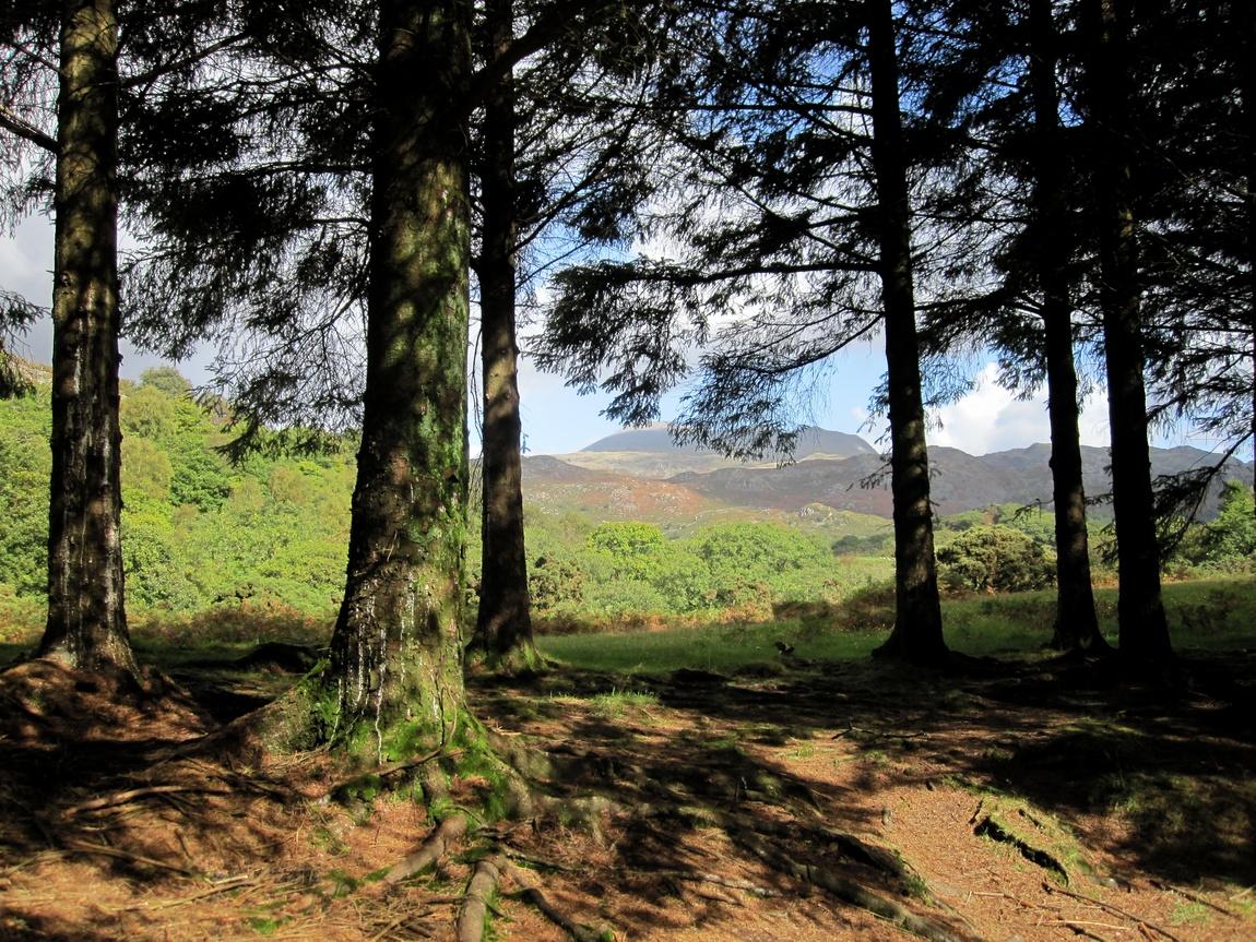 Лес в Озерном крае. Англия