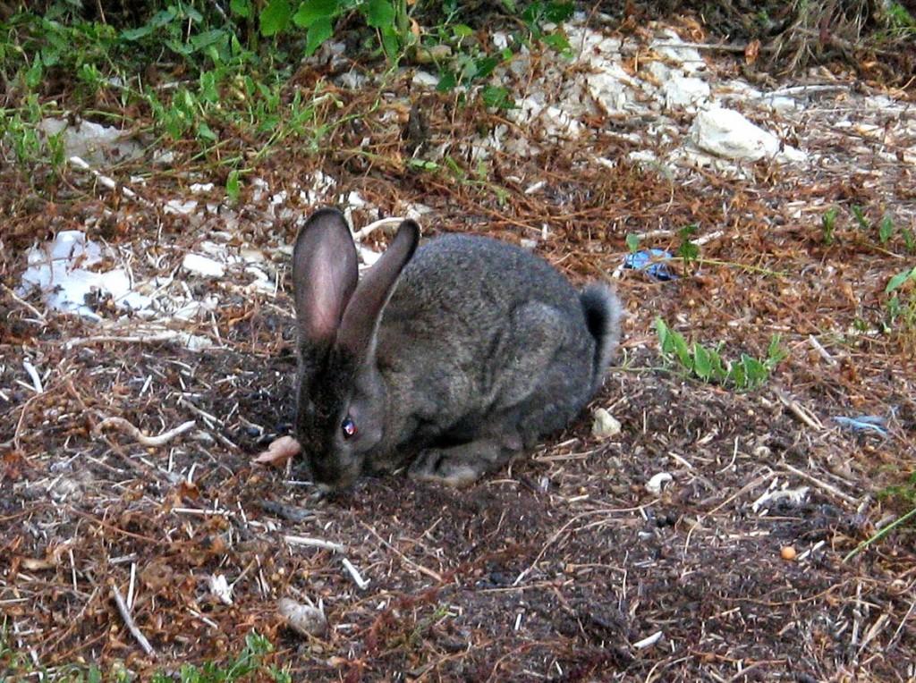 Заяц в Анапе