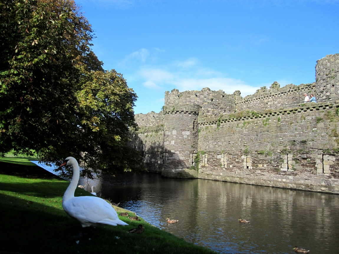 Лебедь в замке Бомарис (Beaumaris Castle). Уэльс