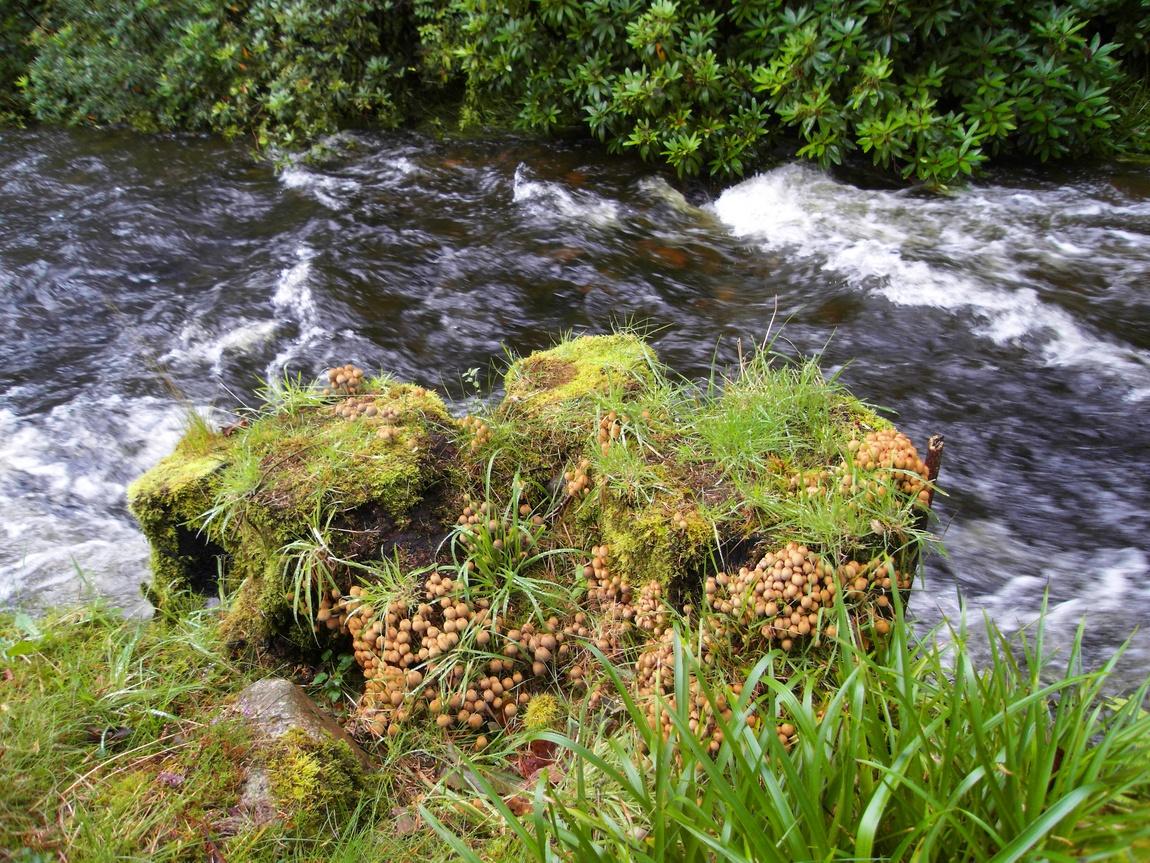 Река в Озёрном крае