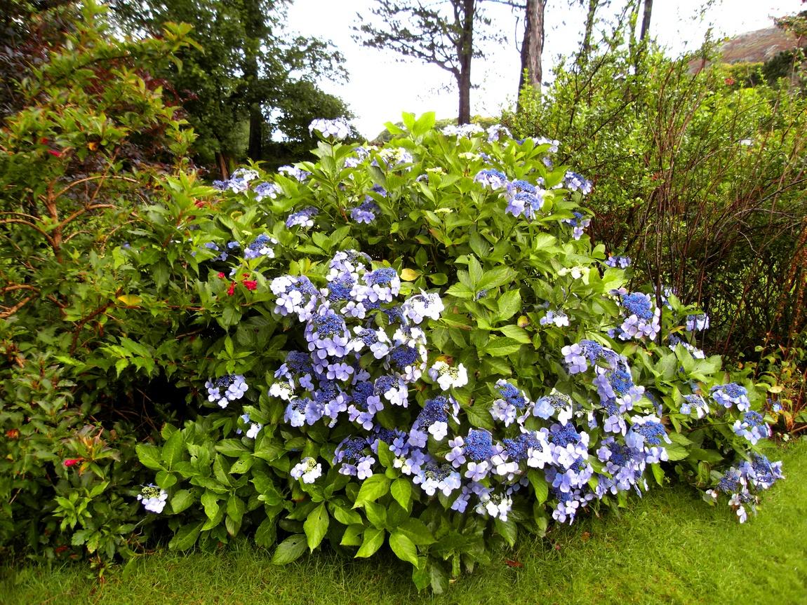 Цветники в Озёрном крае (Англия)