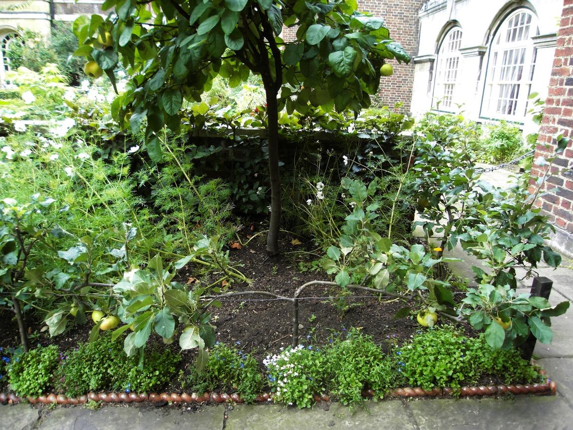 Миниатюрная яблоня в Лондоне