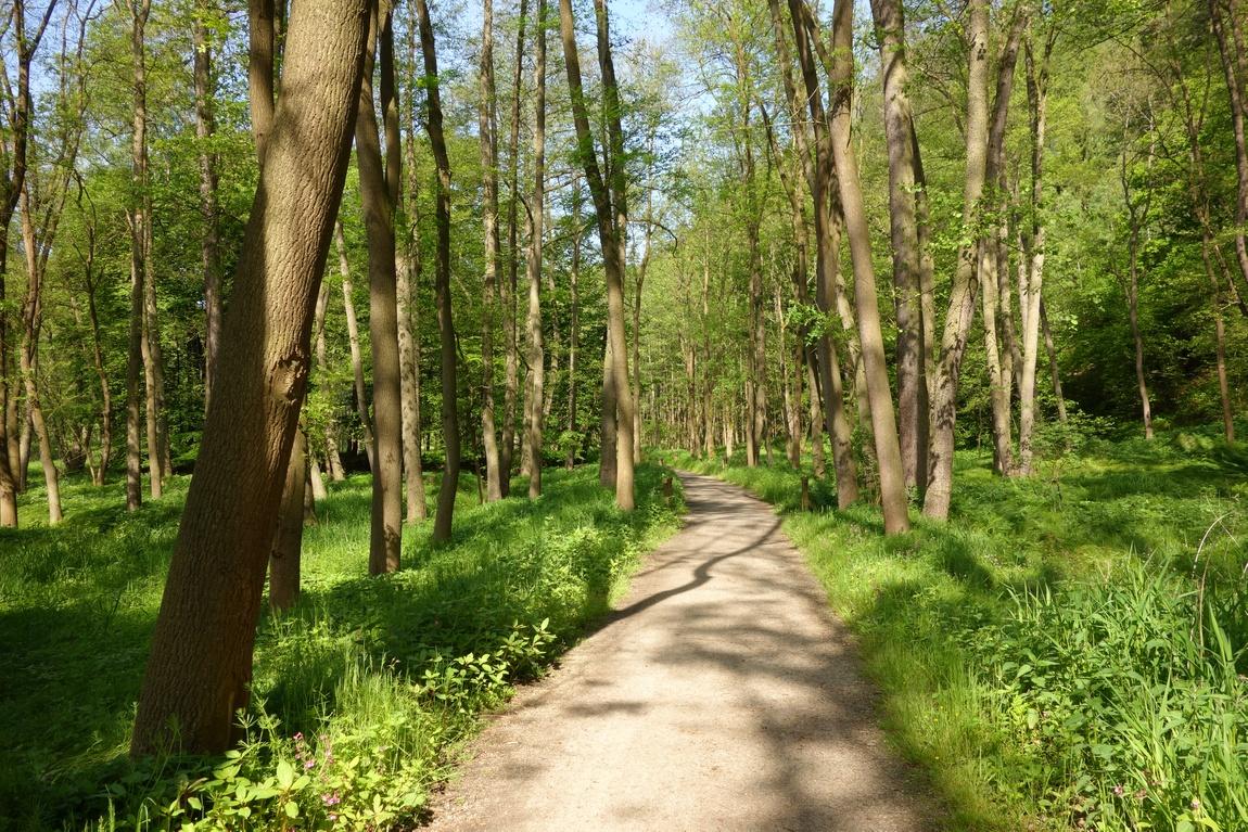 Лес на берегу - где Сватошские скалы