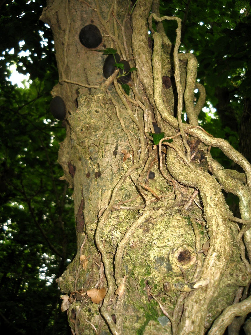 Дерево в лесу о океана