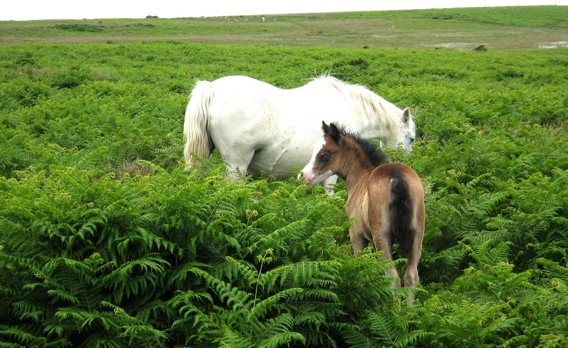 20 Белый конь