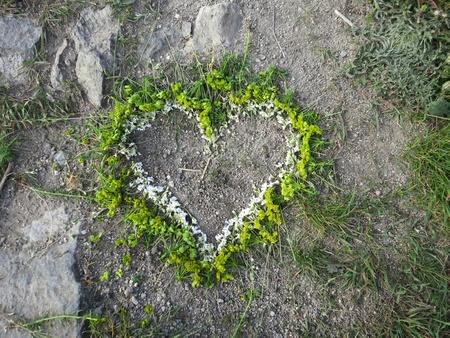 Сердце. Цветы. Зелень на Ангельской горе в Чехии