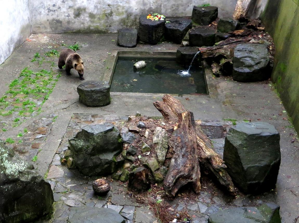 Медвежий ров в Чешском Крумлове