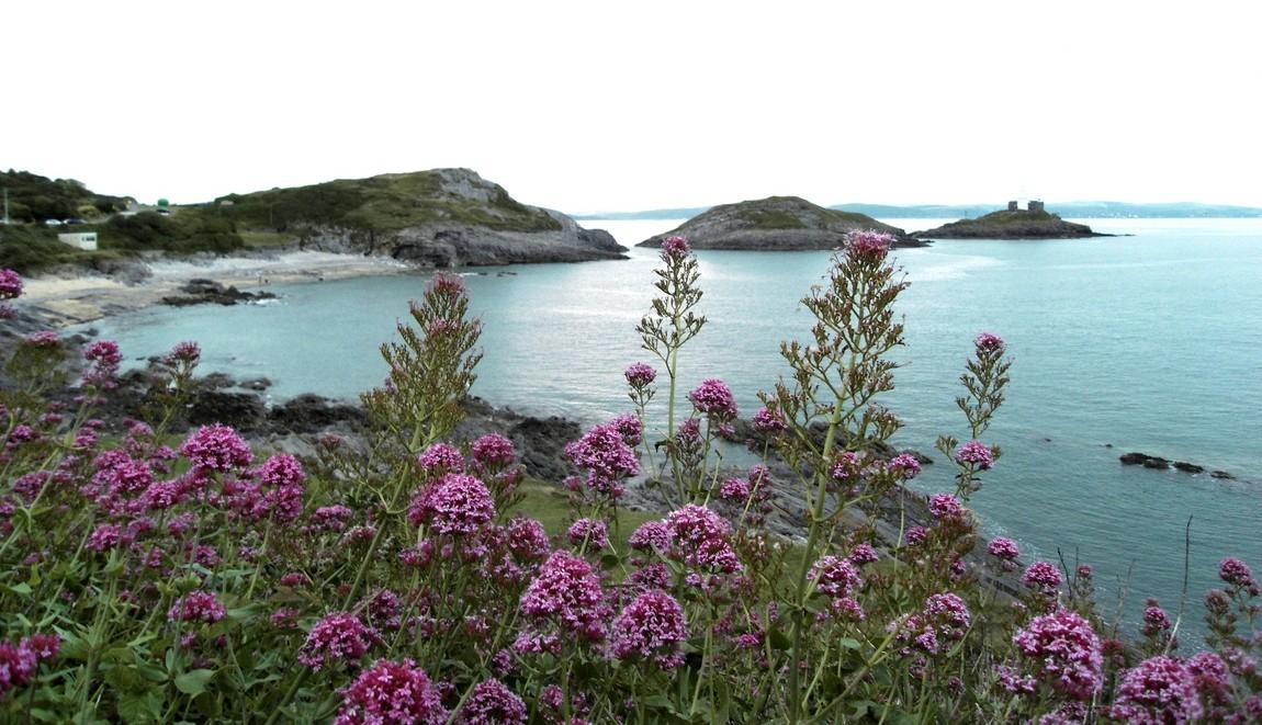 Дикие цветы на фоне моря (Англия)