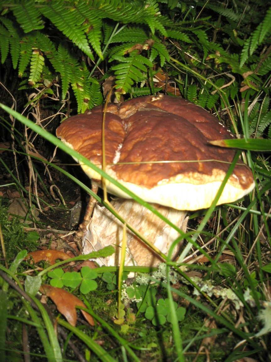9.9.9.8 Белый гриб