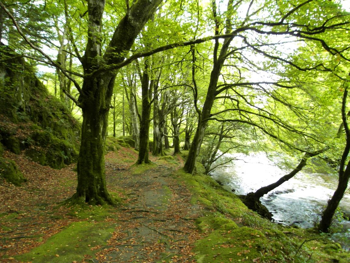 Лес в Гленко, Шотландия