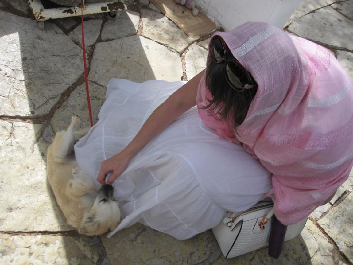 Шаловливый щенок в Греции.