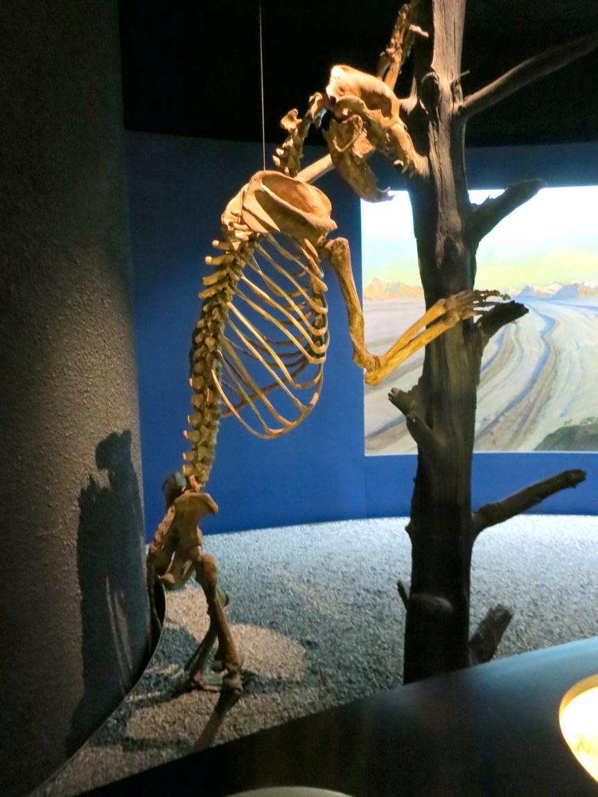Экспозиция древних животных