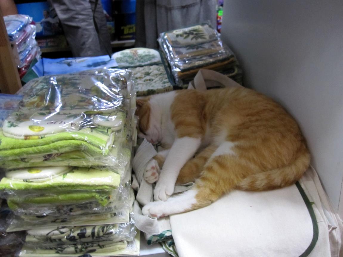 Кошки продаются на полках магазина. (Греция)