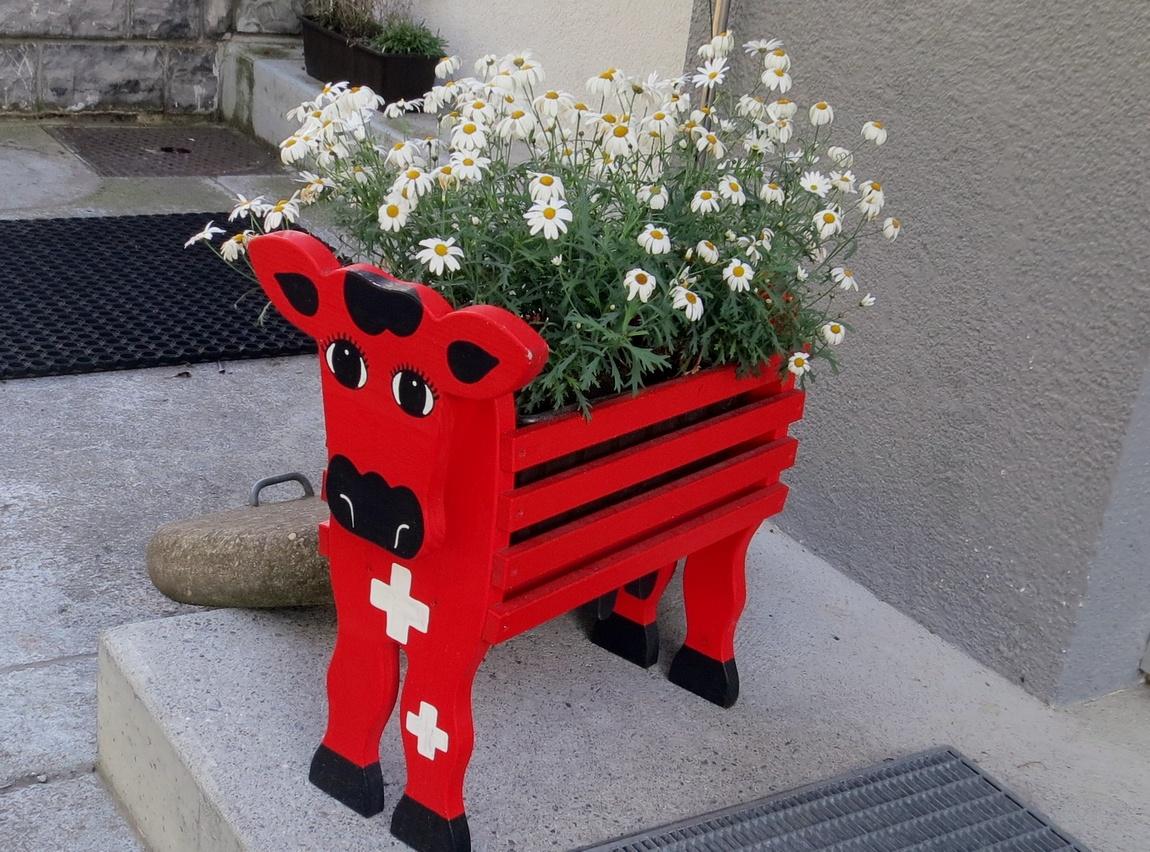 Композиции с ромашками. (Швейцария)