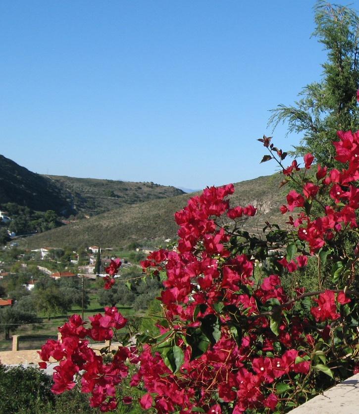 Цветущее дерево в Греции