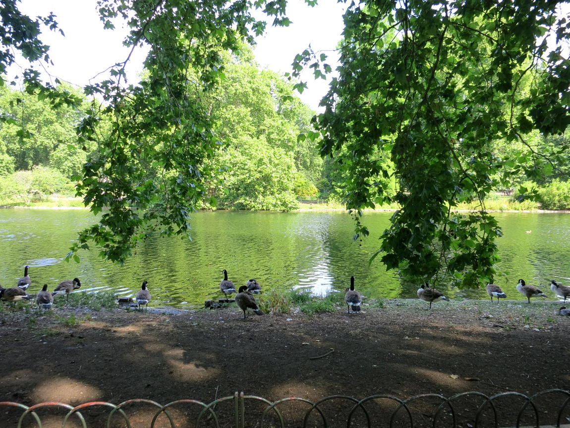 Сент-Джеймский парк в Лондоне.