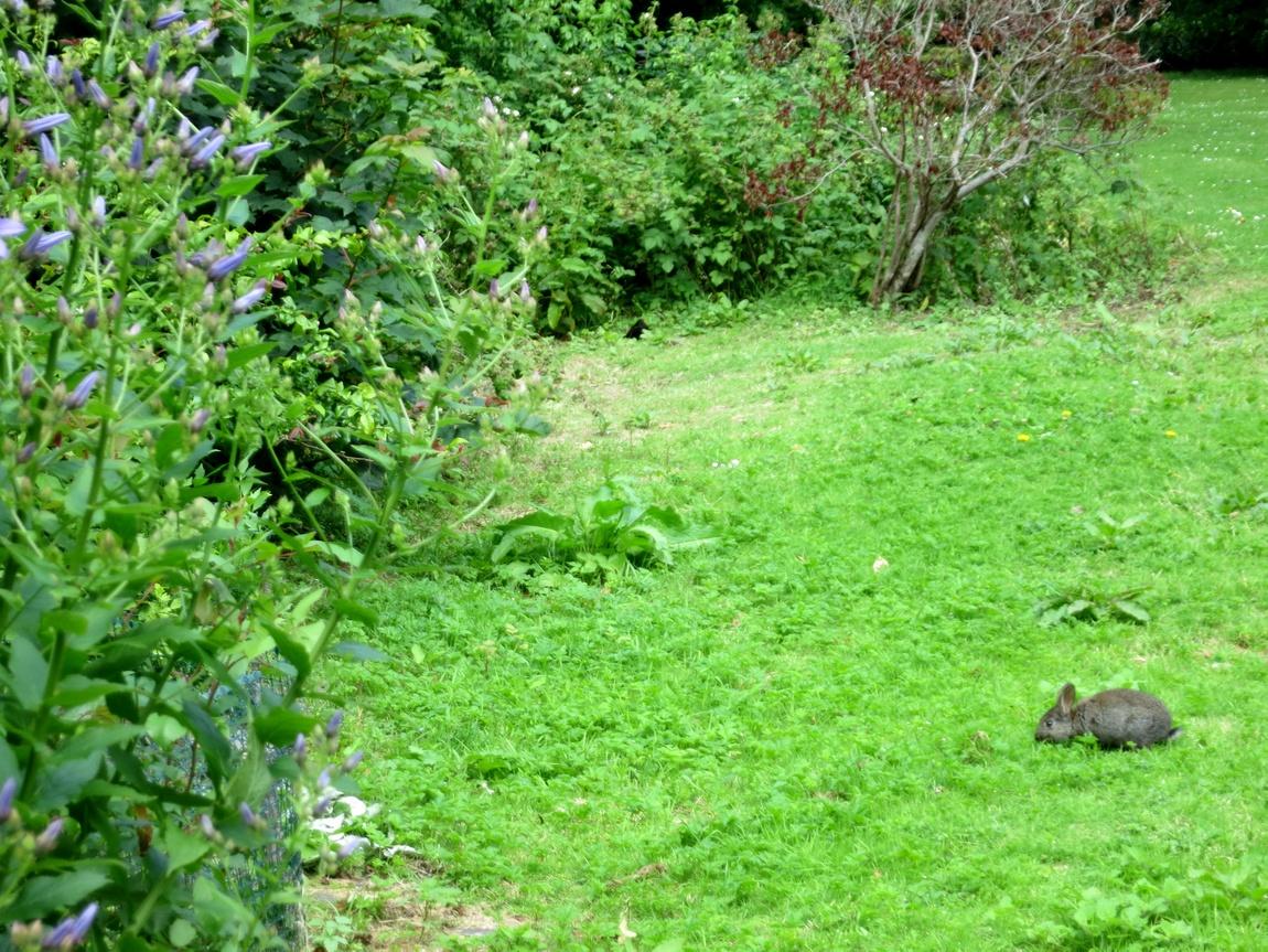 Кролики в Шотландии