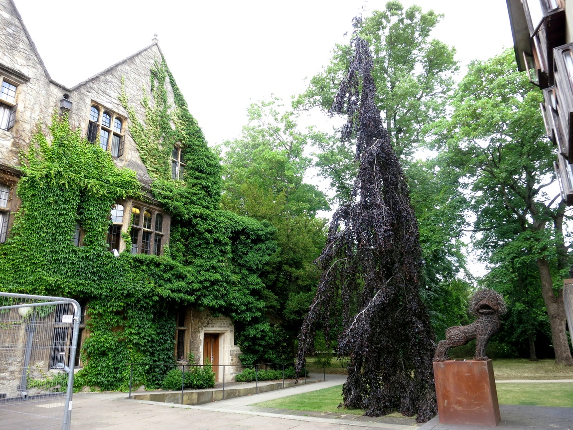 Дерево конусовидной формы в Англии
