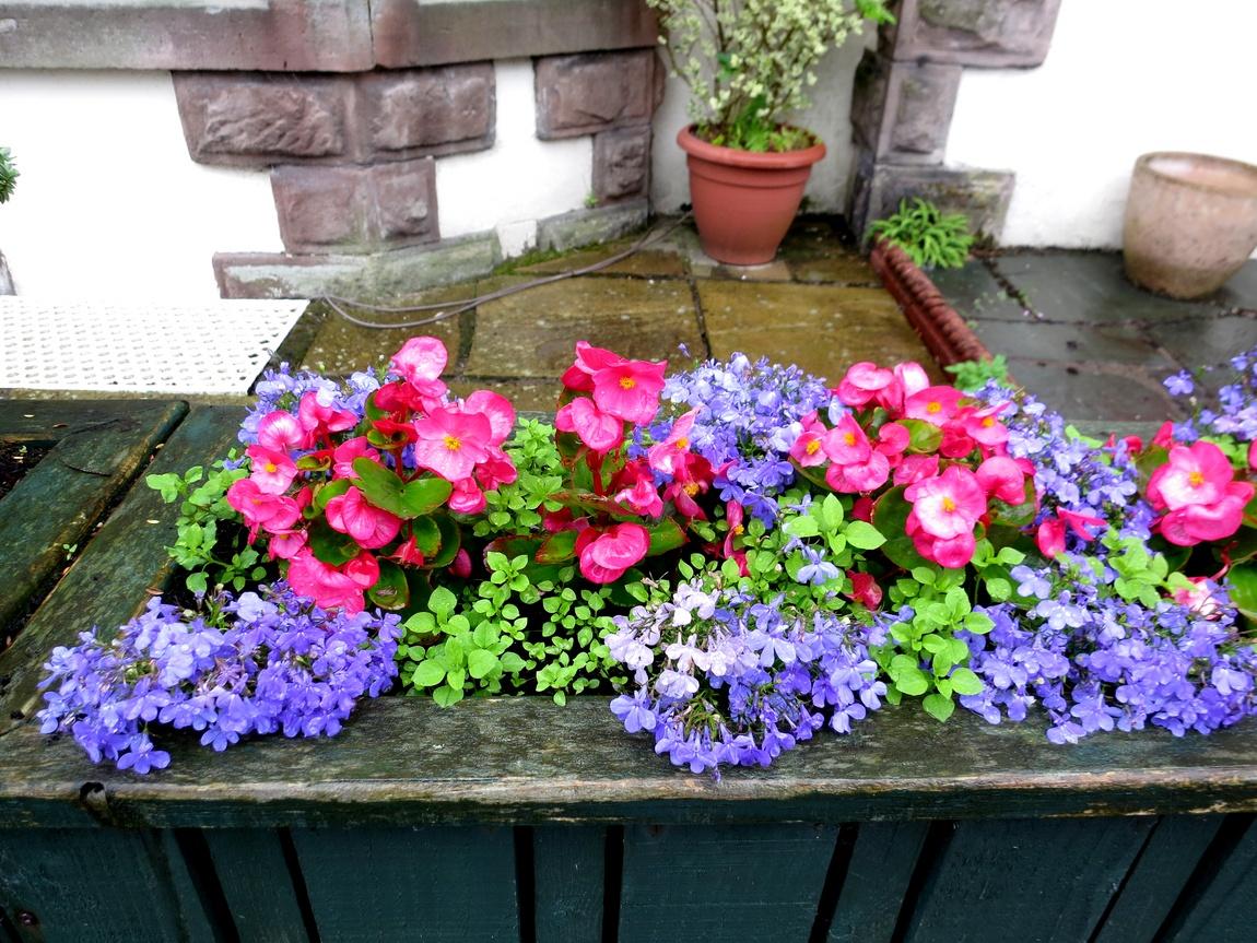 Цветы в Шотландии