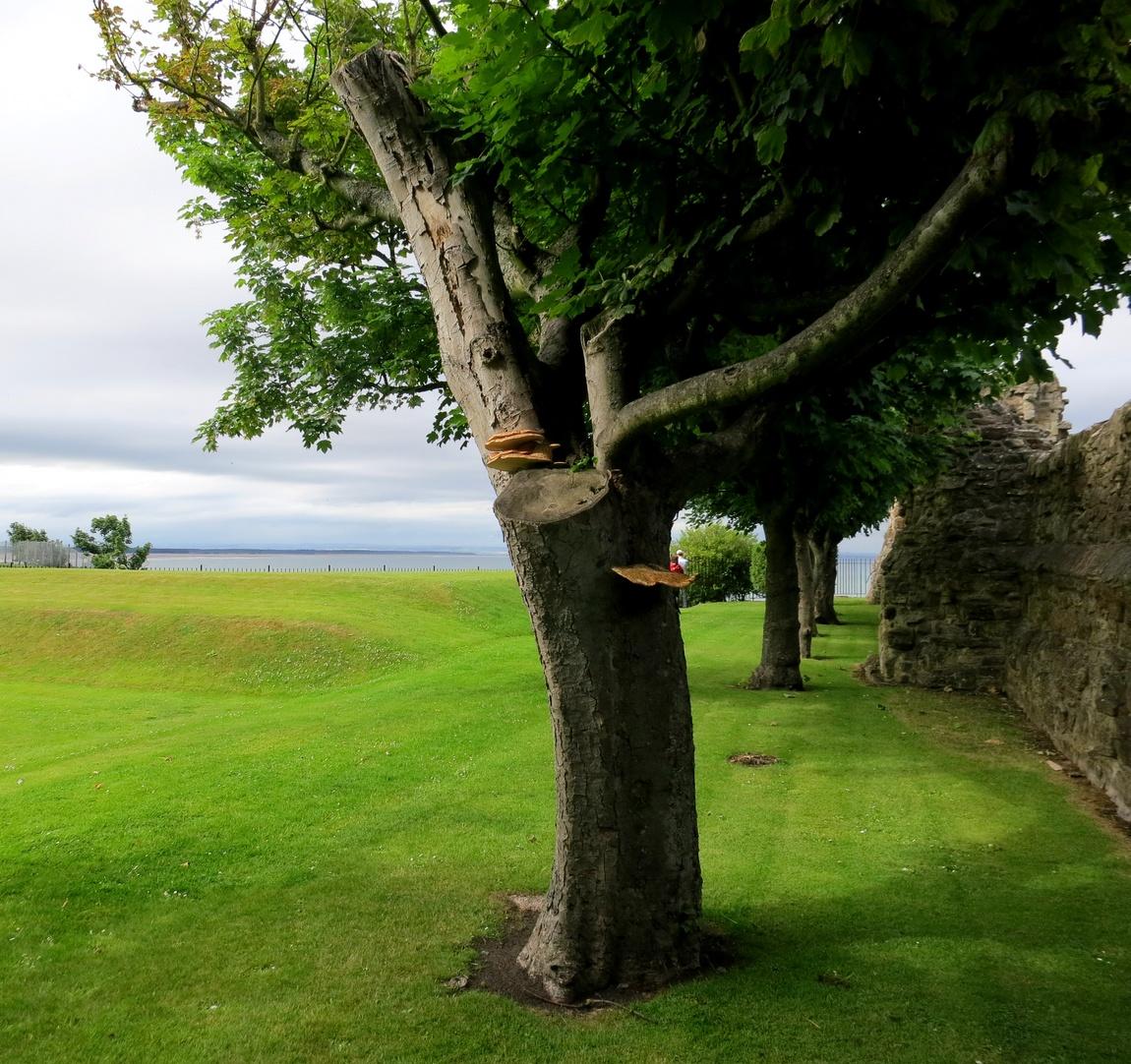 Парк у Замка Святого Андрея - Шотландия