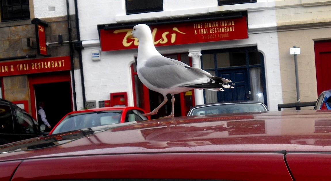 Чайка на машине в Англии