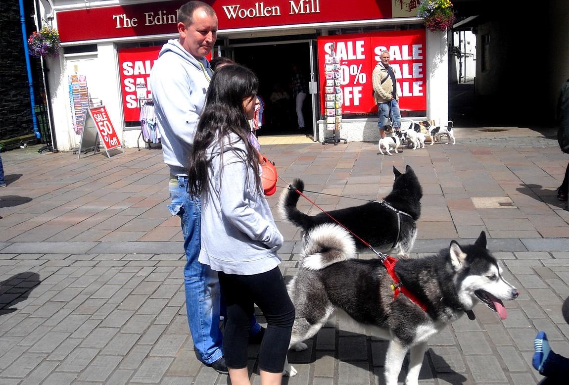 Любители собак.Озёрный край в Англии