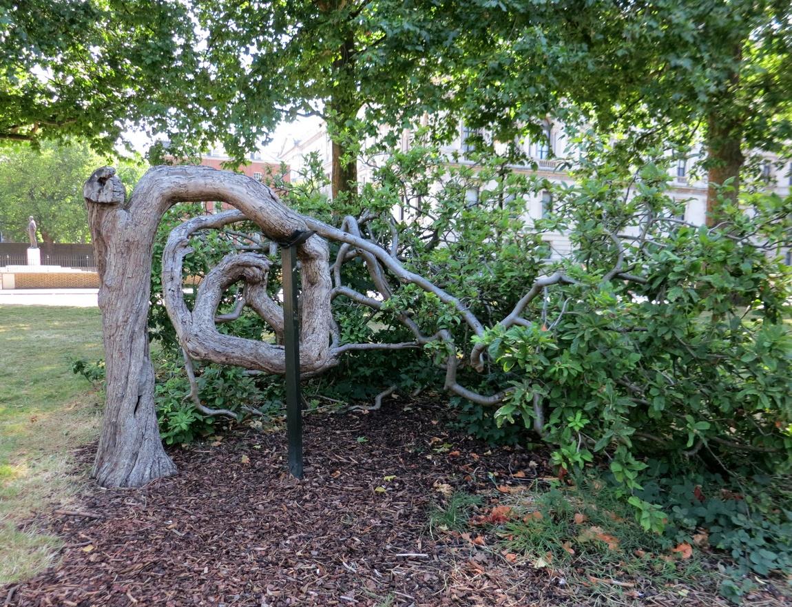 Дерево в Сент-Джеймском парке Лондона