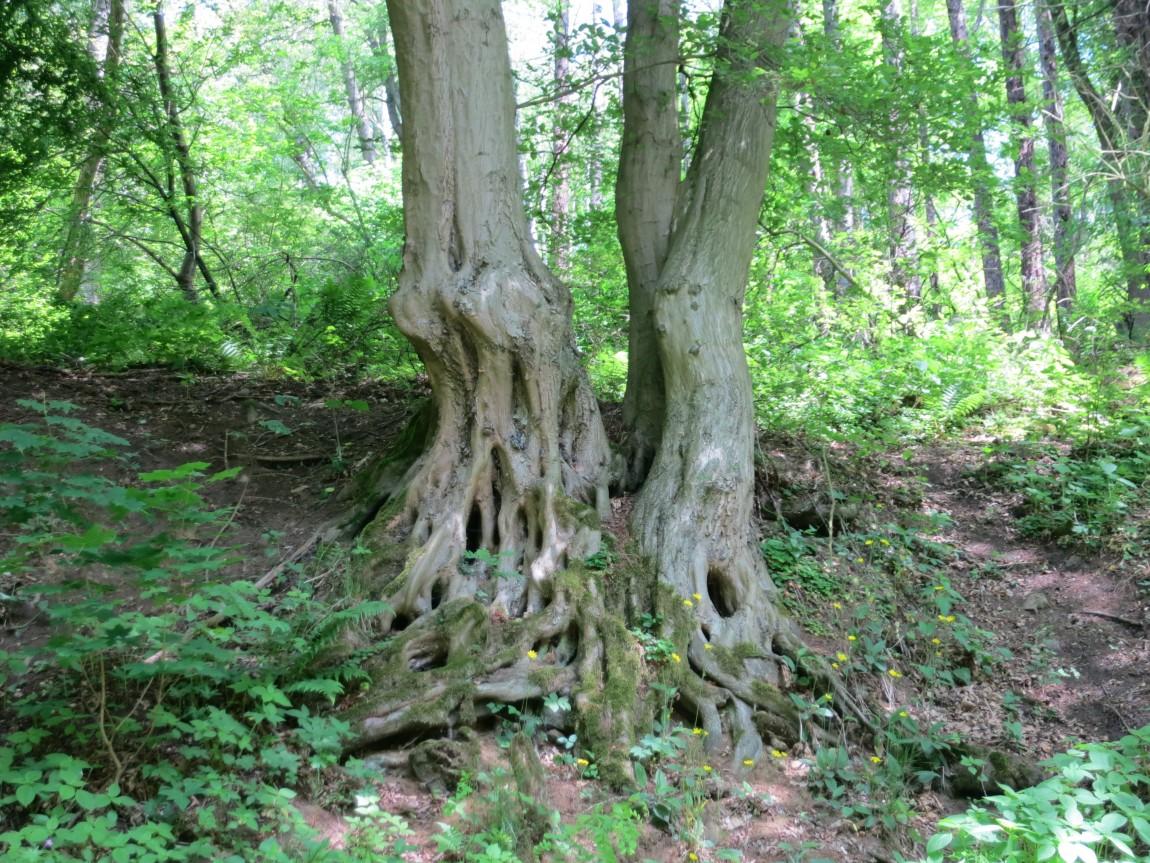 Дерево в Чехии