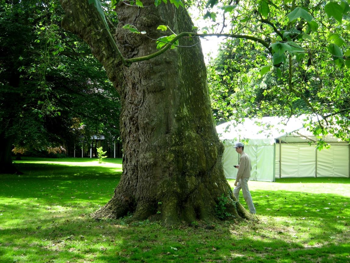 Англия -дерево в парке Оксфорда
