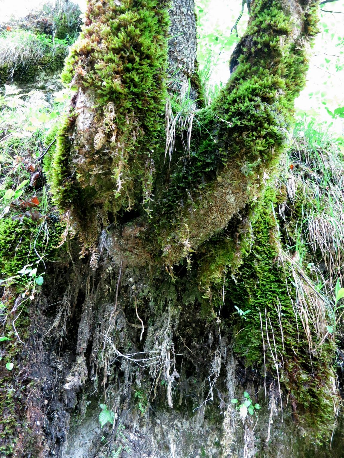 Австрия - дерево