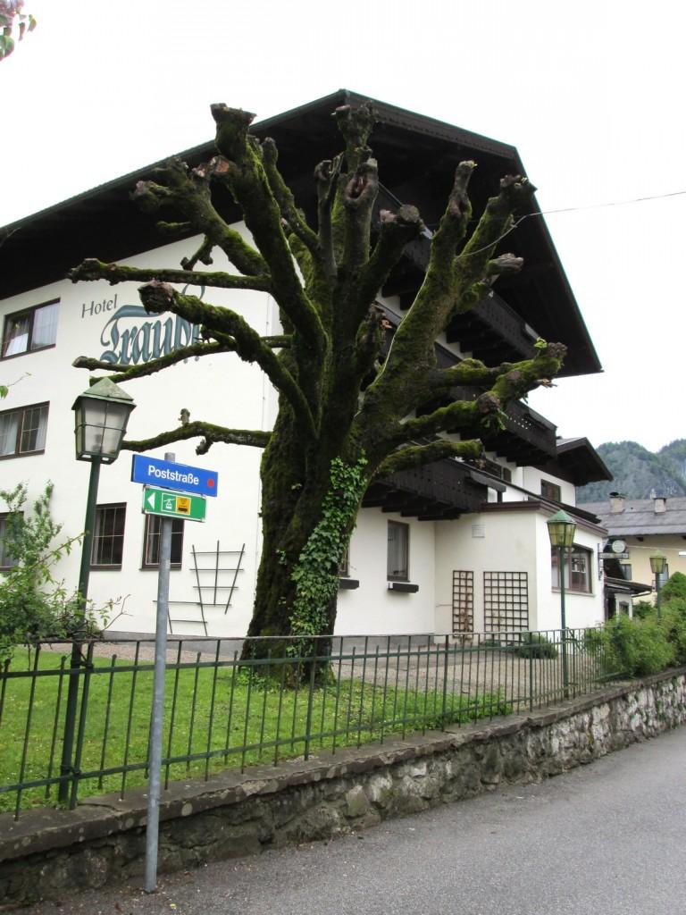 Дерево Германия