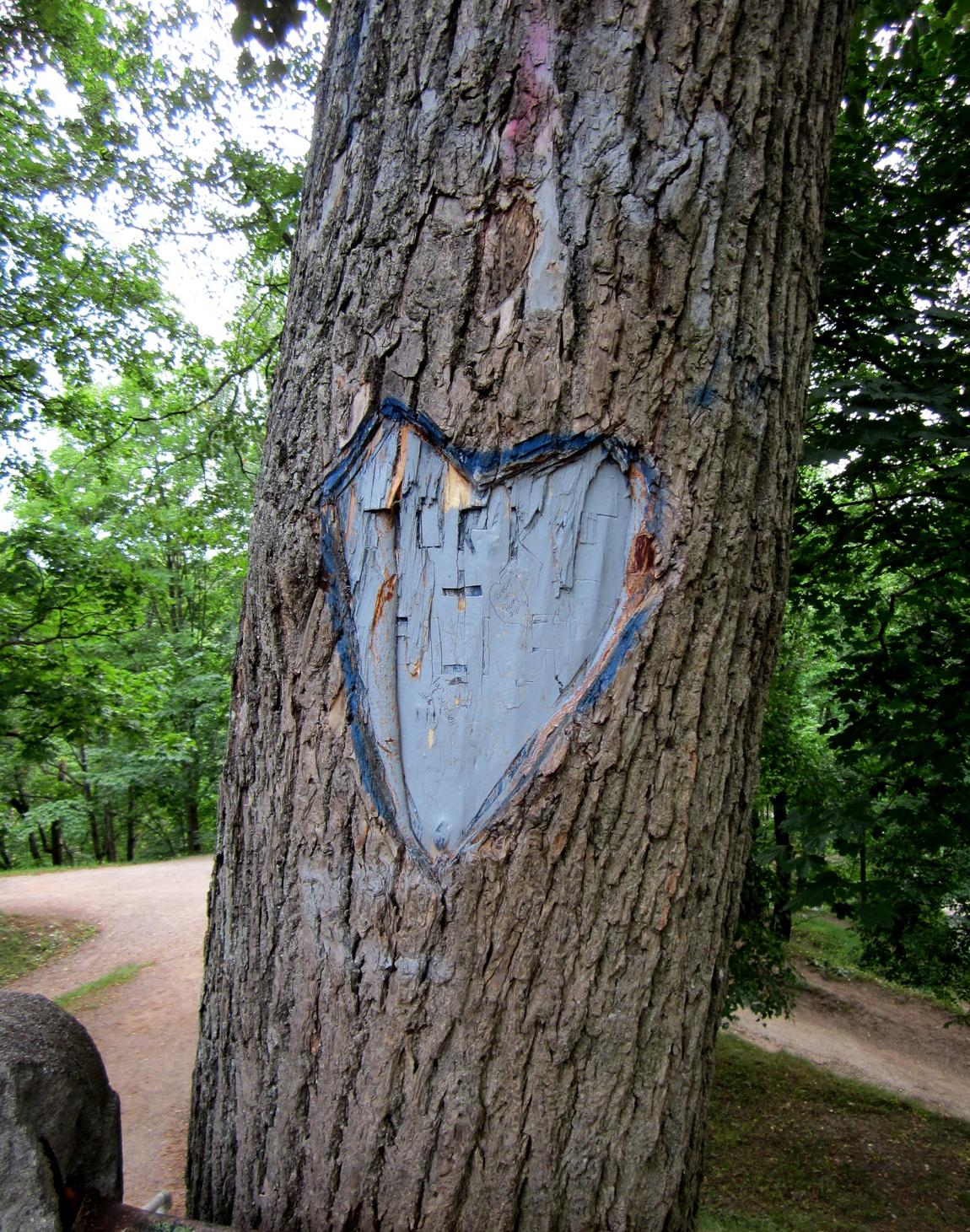 Дерево Любви (Таллин)