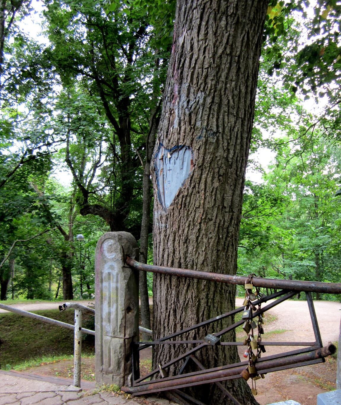 Дерево Таллин
