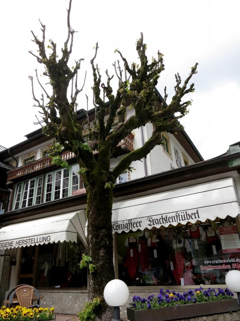 Германия - дерево