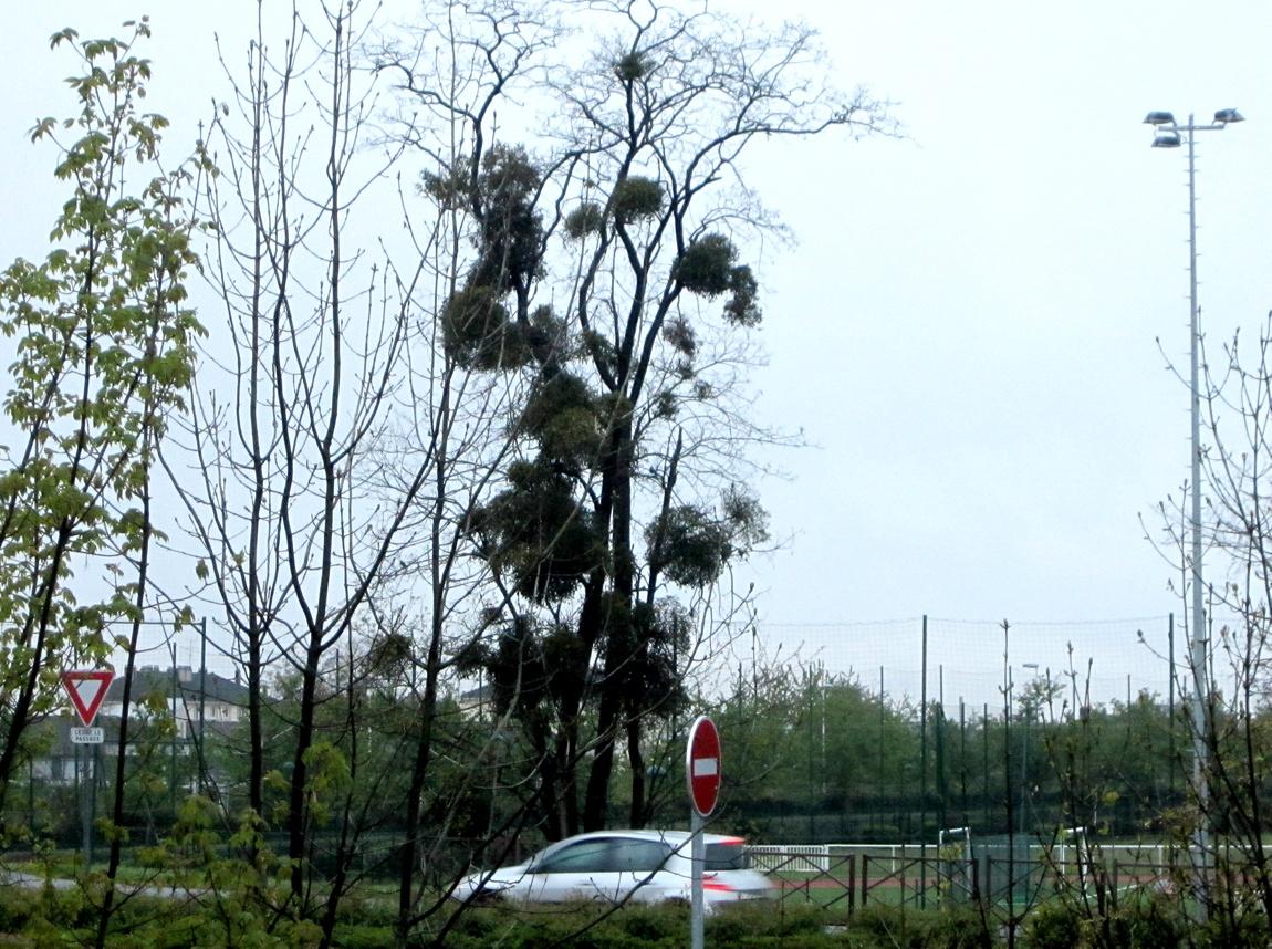 Гнёзда на дереве Франция