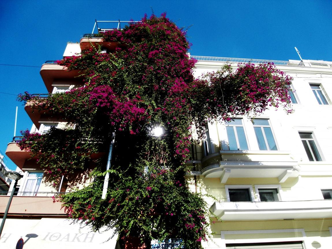Цветущее дерево в Италии