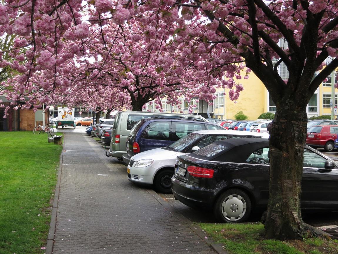 Деревья цветут в Германия