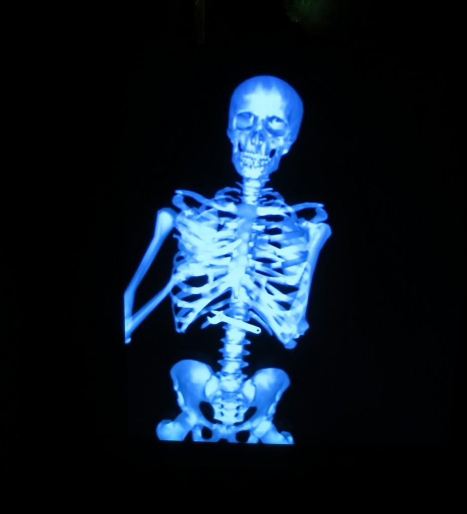 Скелет - Музей оптических иллюзий