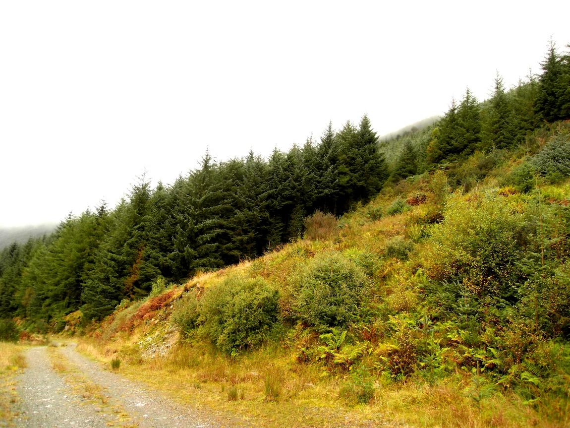 Горная тропа в Шотландии