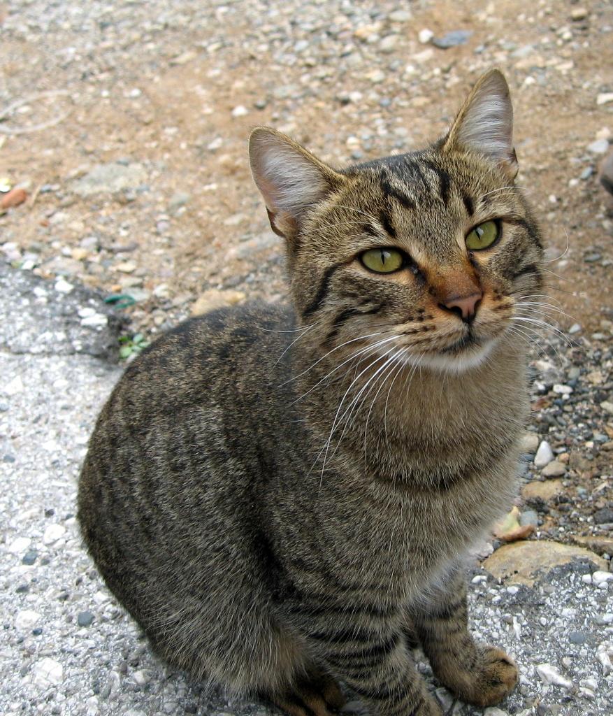 Умная Кошка в монастыре (Греции)