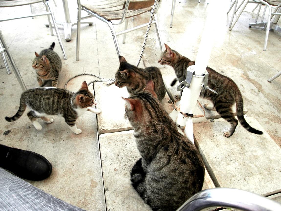 Кошки попрошайки в Греции