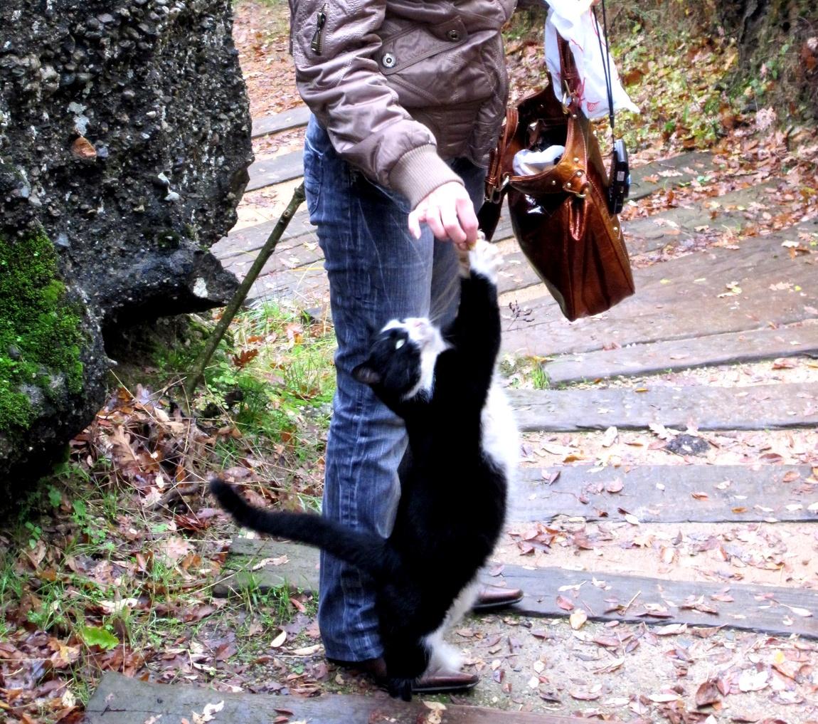 Кошка попрошайка. (Греция)