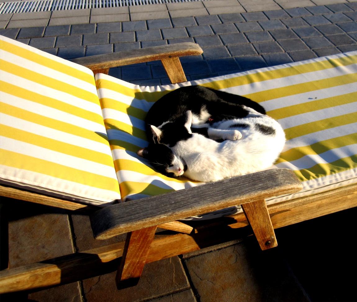 Эти кошечки нежатся и загорают на пляже. (Турция)
